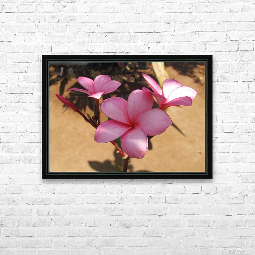 Pink Plumeria HD Sublimation Metal print with Decorating Float Frame (BOX)