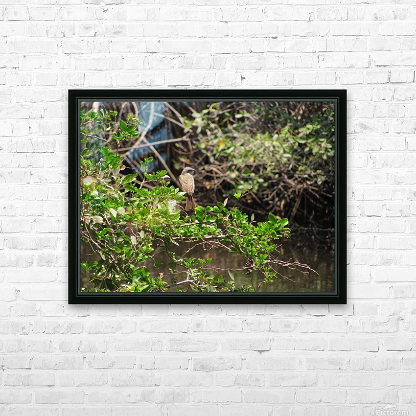 Tropical Bird in Tree HD Sublimation Metal print with Decorating Float Frame (BOX)