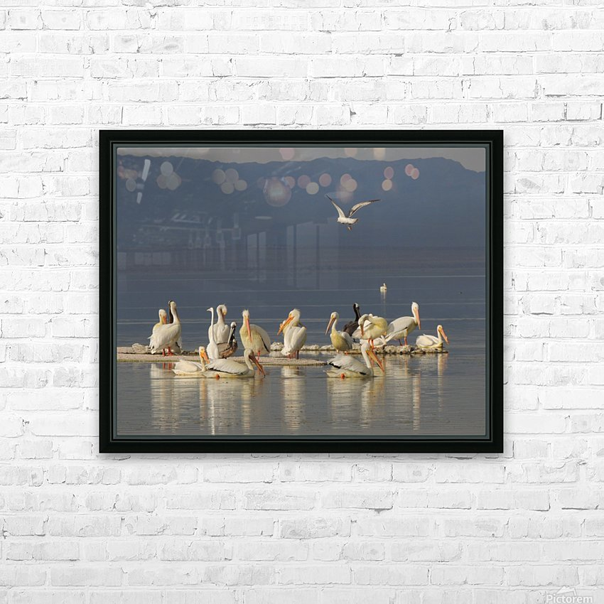 Pelicans of the Salton Sea HD Sublimation Metal print with Decorating Float Frame (BOX)