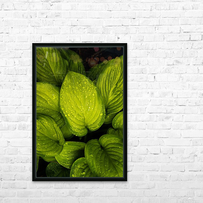 Rain Drops and Hosta Leaves HD Sublimation Metal print with Decorating Float Frame (BOX)