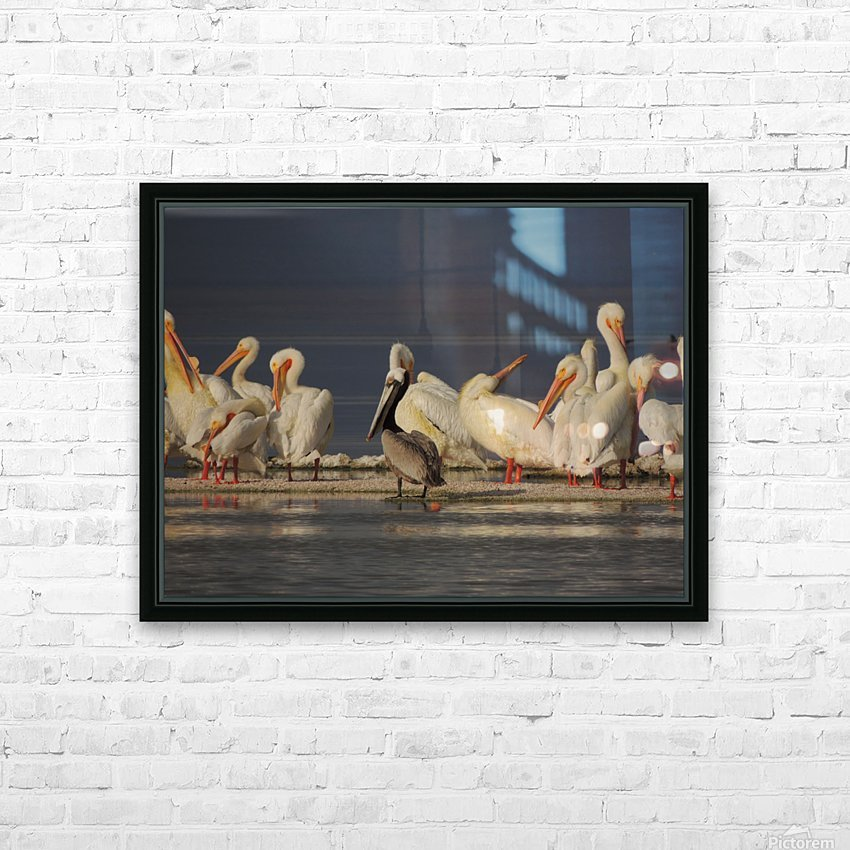Pelicans at the Salton Sea HD Sublimation Metal print with Decorating Float Frame (BOX)