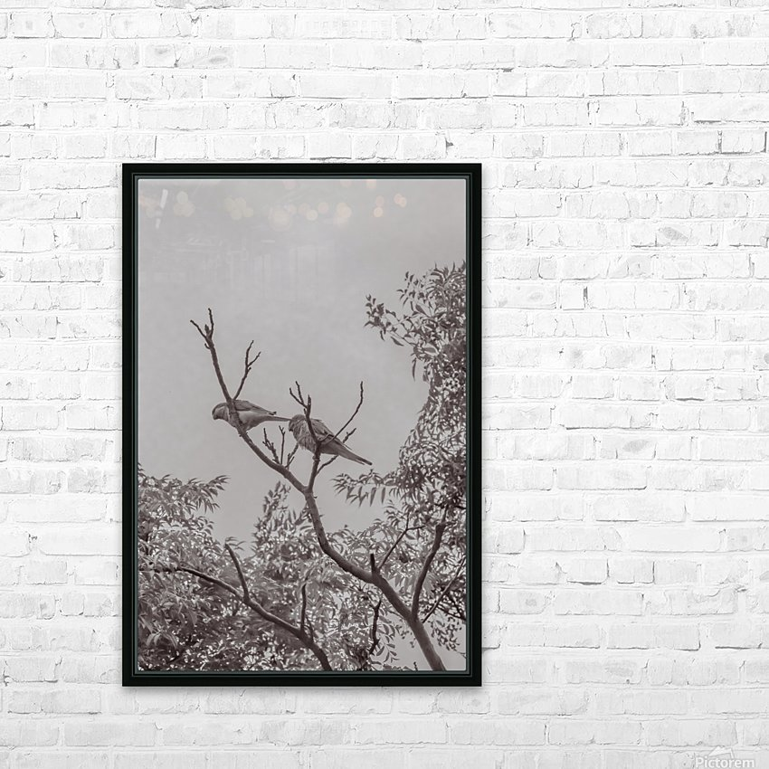 Couple of Parrots in the Top of a Tree HD Sublimation Metal print with Decorating Float Frame (BOX)