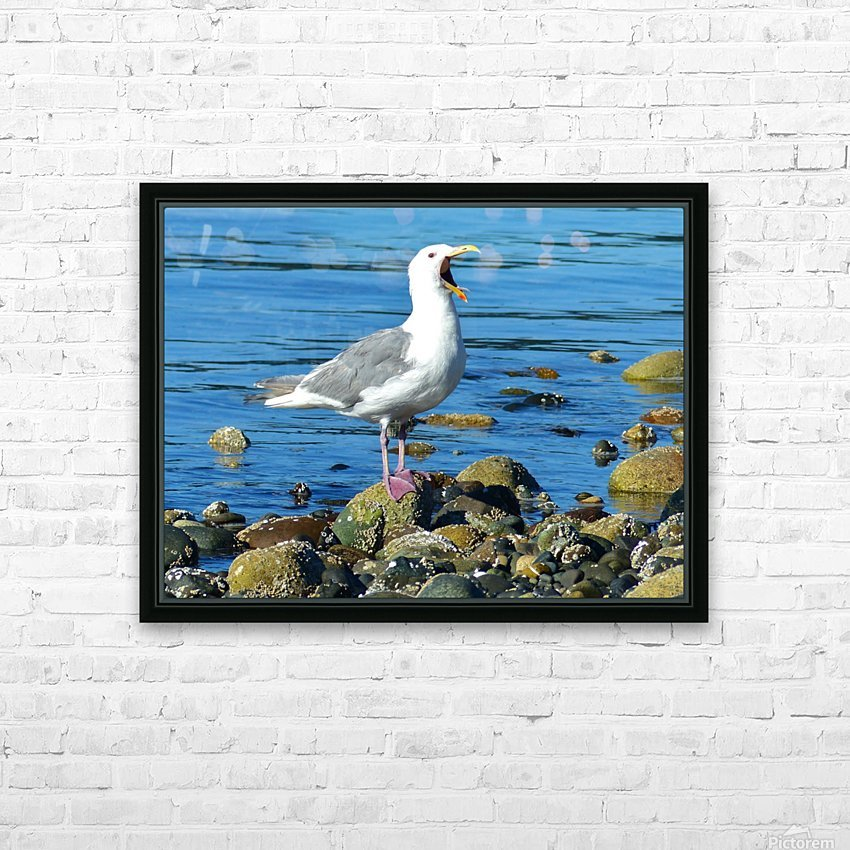 Yawning Gull HD Sublimation Metal print with Decorating Float Frame (BOX)