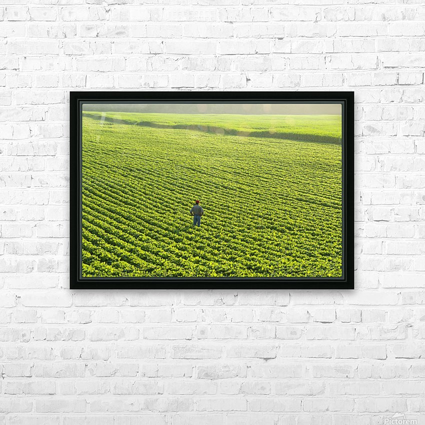 Portrait of a farmer walking through a large green soybean field in central Iowa in summer; Iowa, United States of America HD Sublimation Metal print with Decorating Float Frame (BOX)