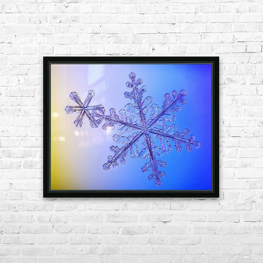 Photomicroscopic close up of two snowflake crystals, Alaska HD Sublimation Metal print with Decorating Float Frame (BOX)
