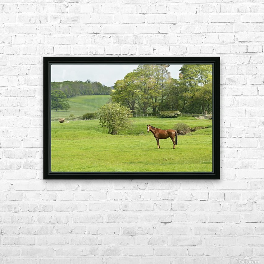 Horse in field; Morpeth, Northumberland, England HD Sublimation Metal print with Decorating Float Frame (BOX)