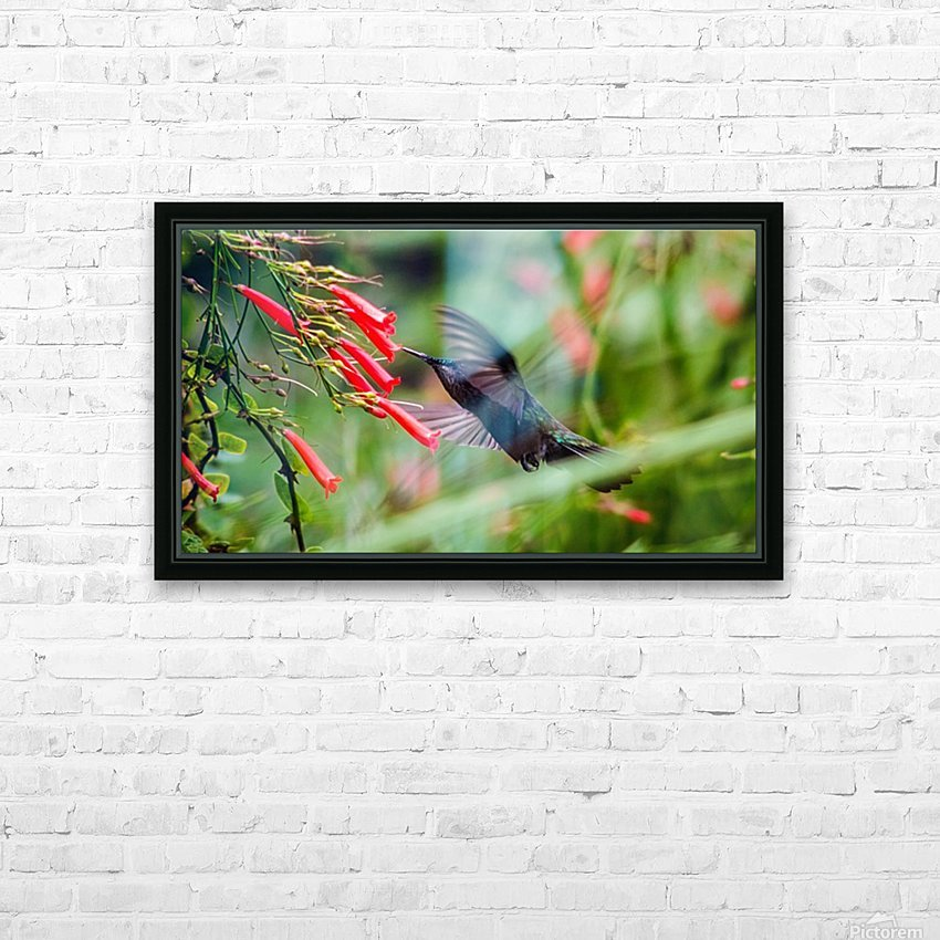 Hummingbird HD Sublimation Metal print with Decorating Float Frame (BOX)