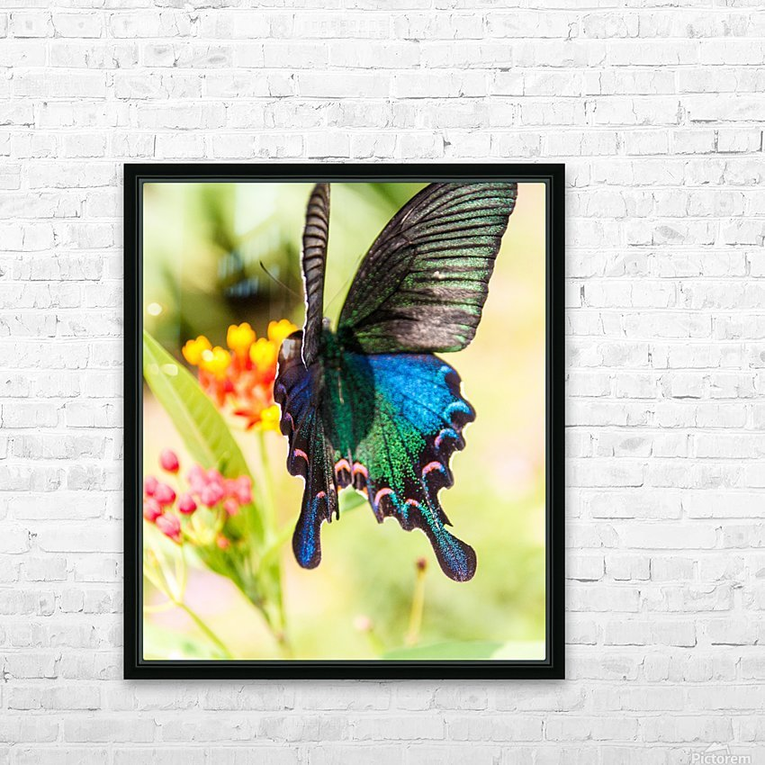 Butterfly not in the sky HD Sublimation Metal print with Decorating Float Frame (BOX)