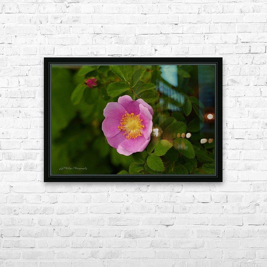 Nootka Rose HD Sublimation Metal print with Decorating Float Frame (BOX)