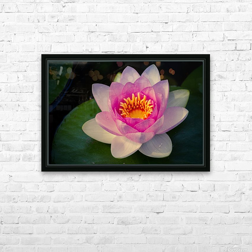 Water lily HD Sublimation Metal print with Decorating Float Frame (BOX)
