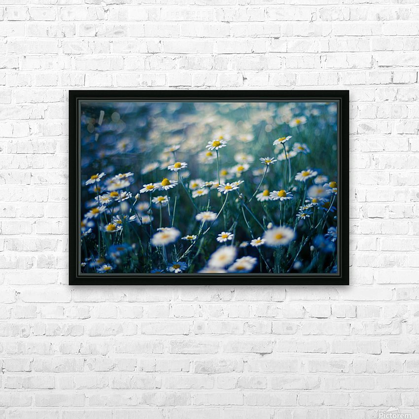 Summer, spring daisy field HD Sublimation Metal print with Decorating Float Frame (BOX)
