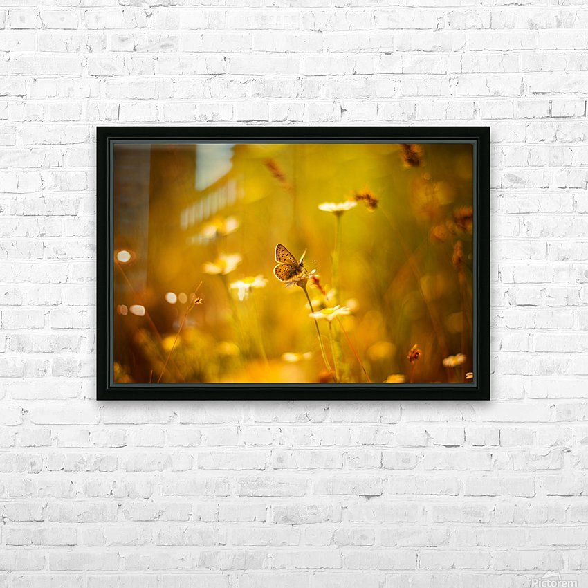 Golden sunset. Daisy and butterfly HD Sublimation Metal print with Decorating Float Frame (BOX)