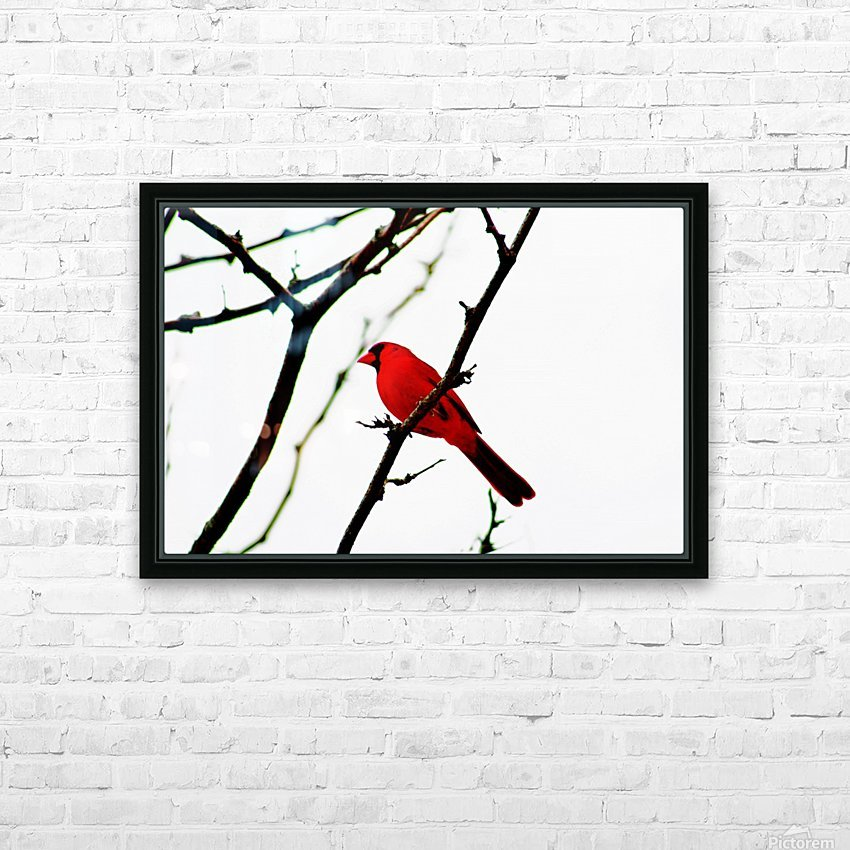 Cardinal Male HD Sublimation Metal print with Decorating Float Frame (BOX)