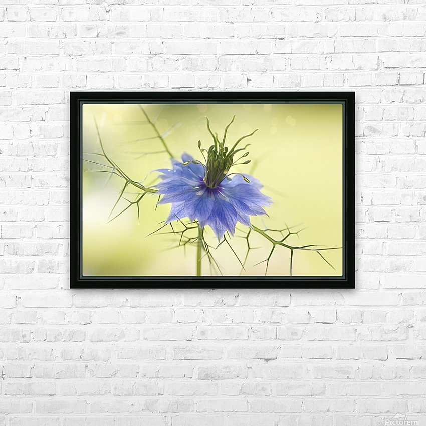 Nigella HD Sublimation Metal print with Decorating Float Frame (BOX)