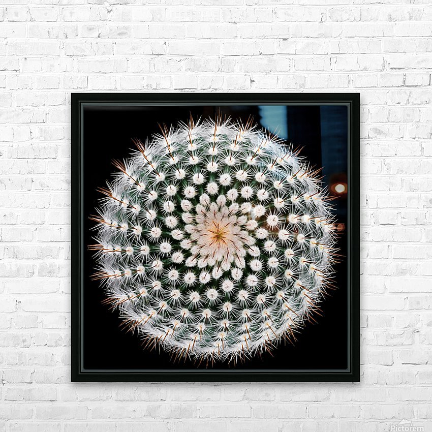 Notocactus scopa HD Sublimation Metal print with Decorating Float Frame (BOX)