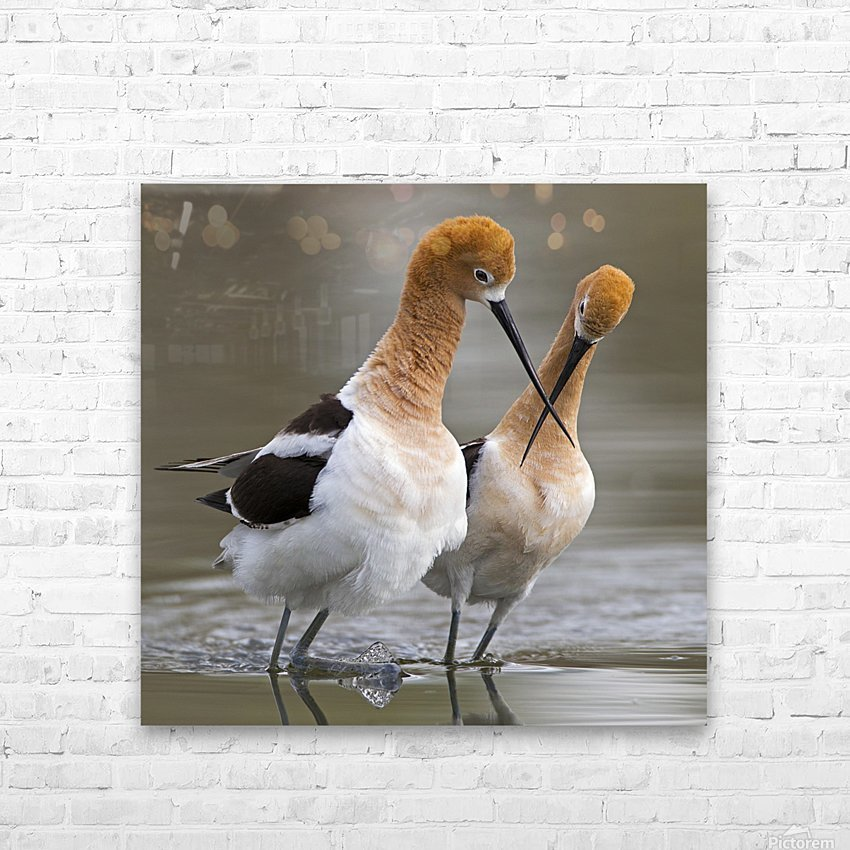Love crossing ... HD Sublimation Metal print with Decorating Float Frame (BOX)