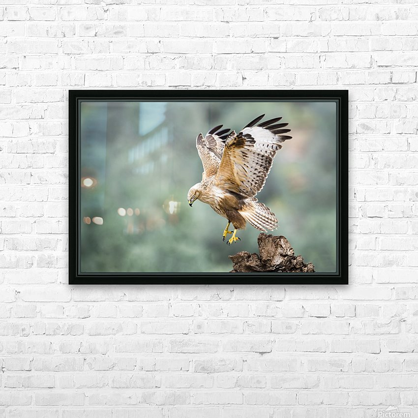 Buteo rufinus HD Sublimation Metal print with Decorating Float Frame (BOX)