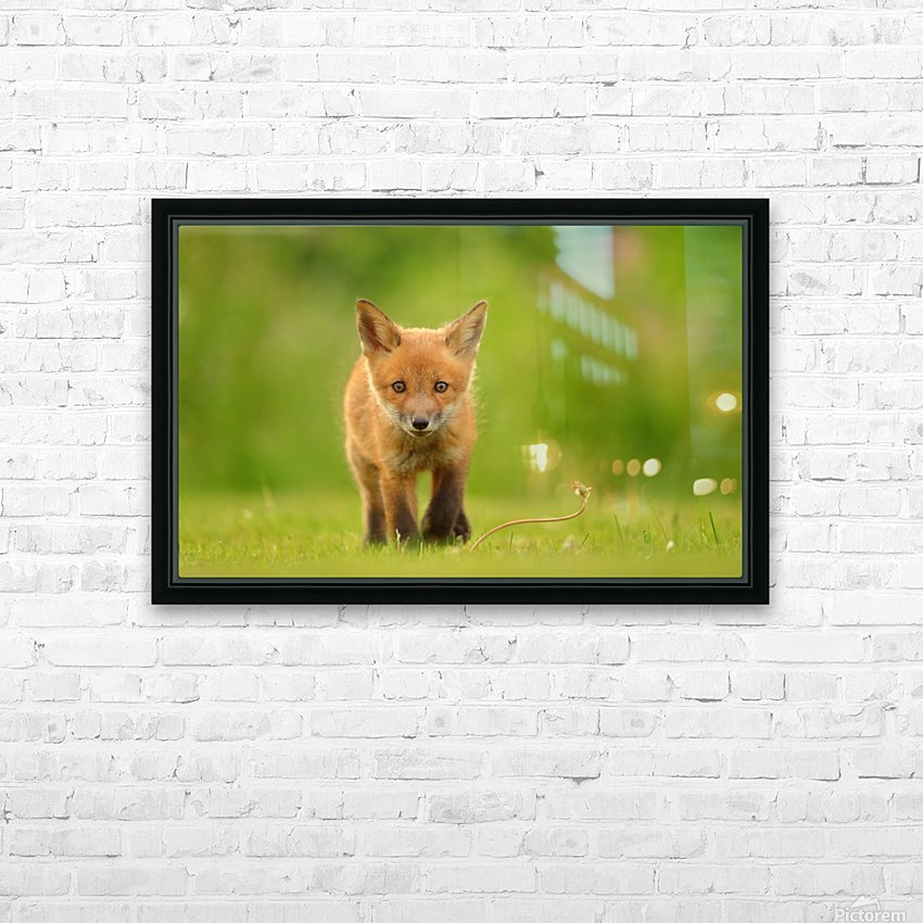 Baby Red Fox HD Sublimation Metal print with Decorating Float Frame (BOX)