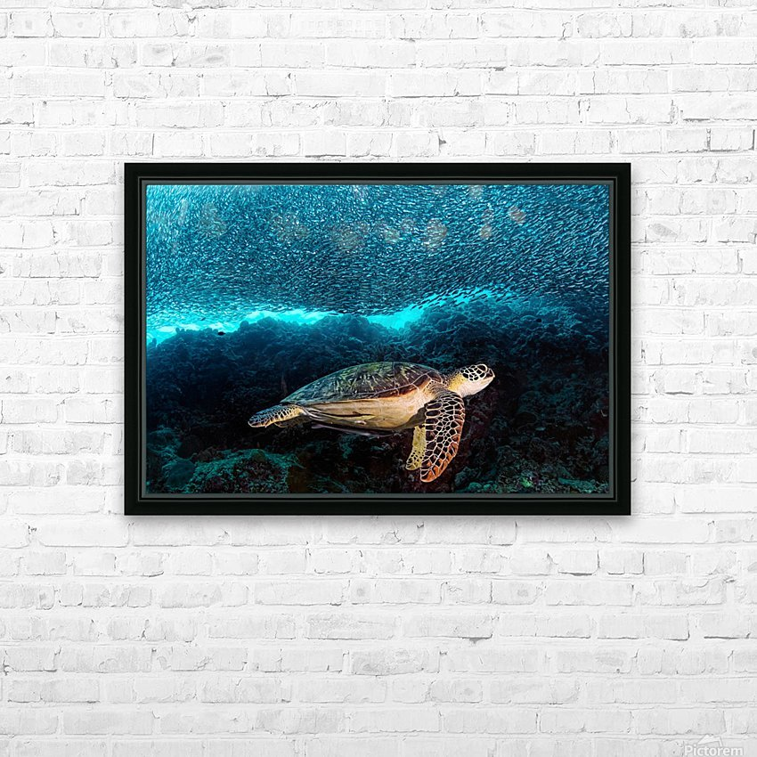 Turtle and Sardines HD Sublimation Metal print with Decorating Float Frame (BOX)