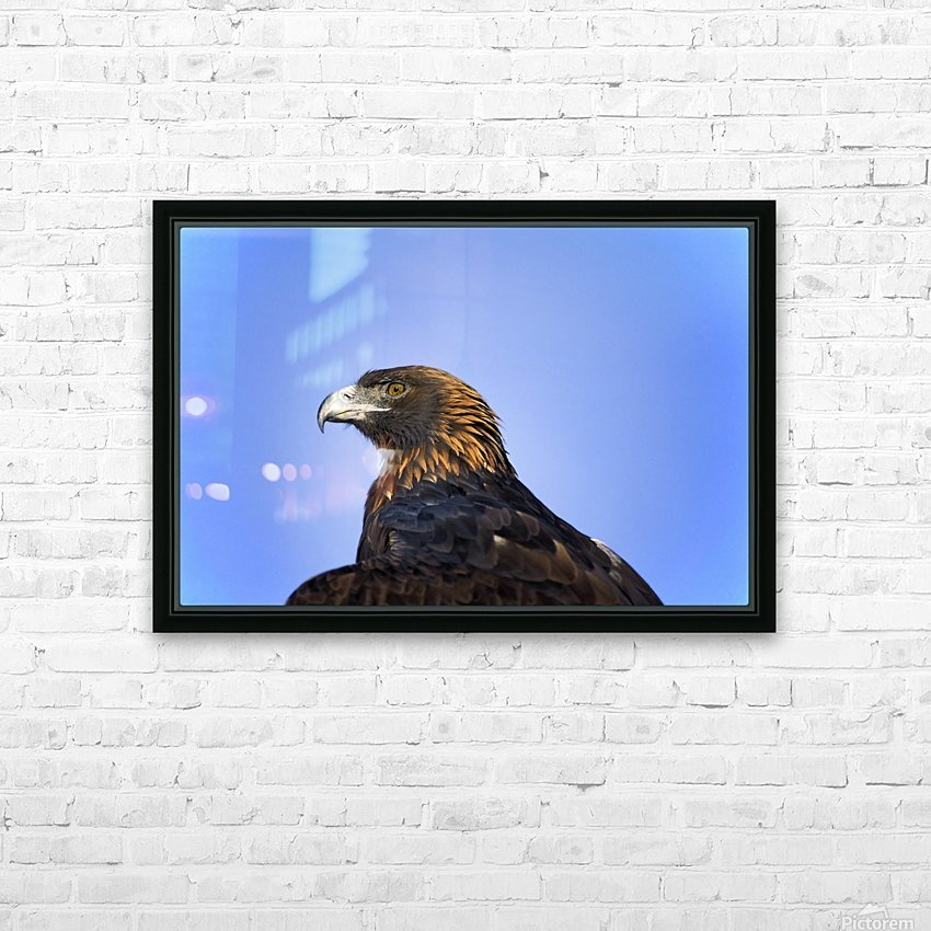 Golden Eagle HD Sublimation Metal print with Decorating Float Frame (BOX)