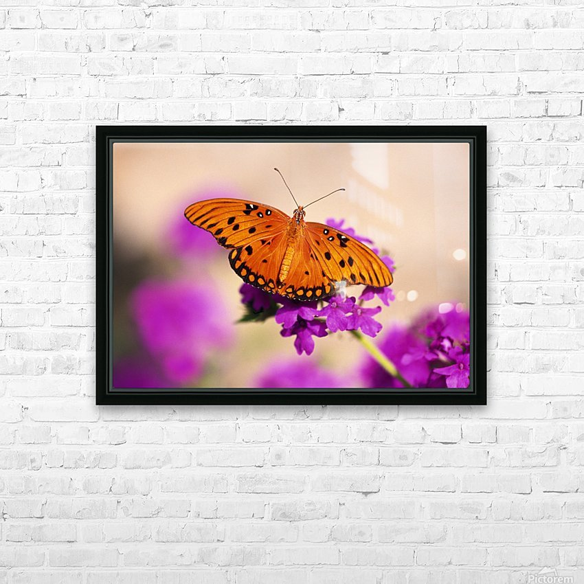 Orange Butterfly HD Sublimation Metal print with Decorating Float Frame (BOX)