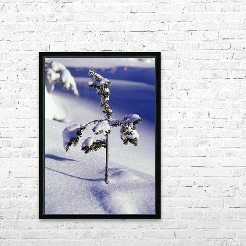 Heavy Snow On Young Pine Tree HD Sublimation Metal print with Decorating Float Frame (BOX)
