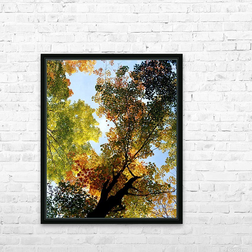 Autumn Trees Low-Angle HD Sublimation Metal print with Decorating Float Frame (BOX)