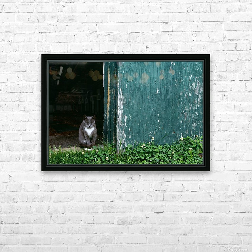Cat In A Doorway HD Sublimation Metal print with Decorating Float Frame (BOX)