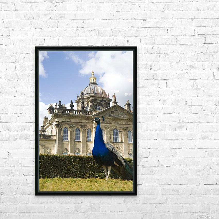 Peacock In Front Of A Building HD Sublimation Metal print with Decorating Float Frame (BOX)