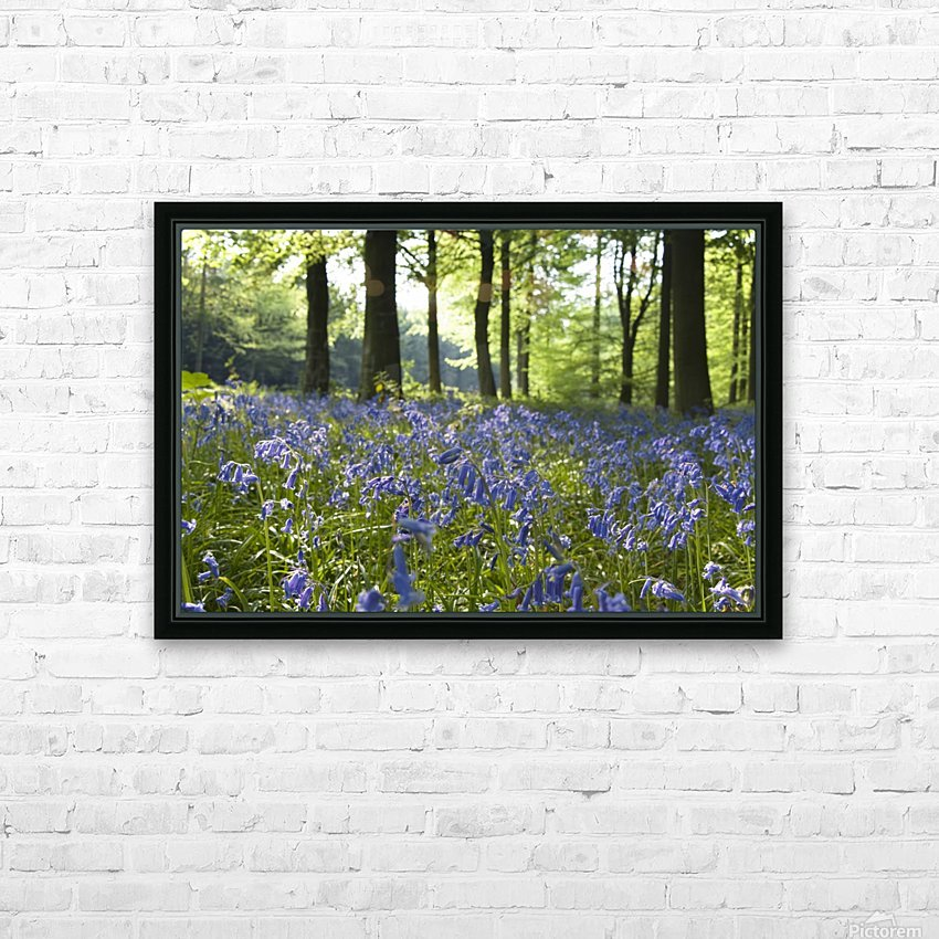 Bluebells On Forest Floor HD Sublimation Metal print with Decorating Float Frame (BOX)