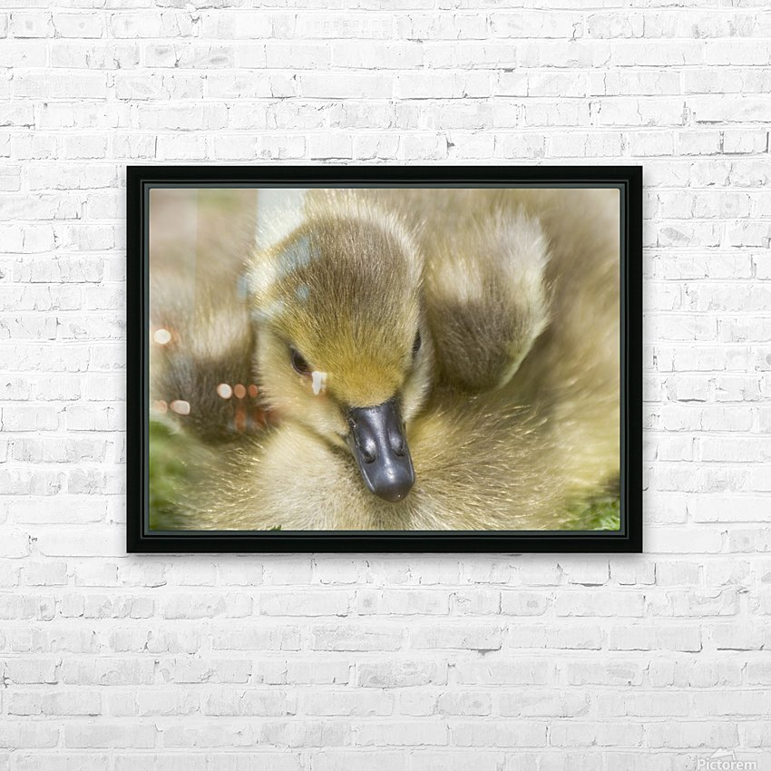 Fuzzy Gosling HD Sublimation Metal print with Decorating Float Frame (BOX)