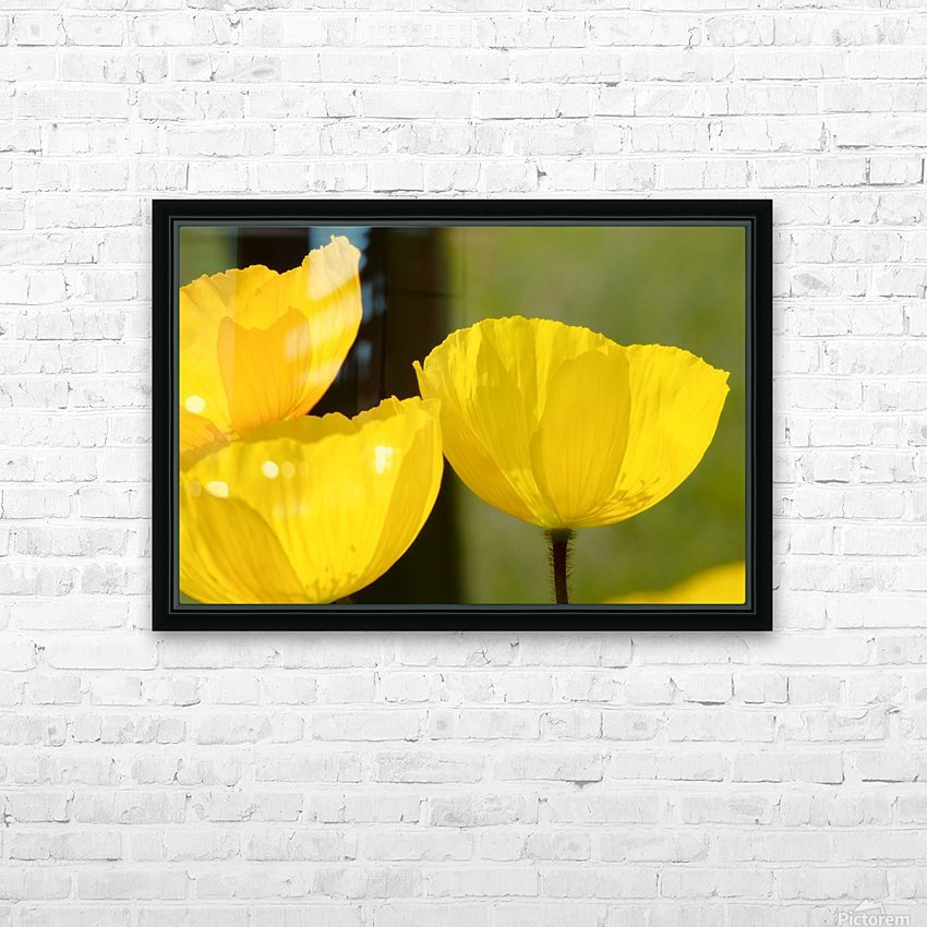 Welsh Poppy HD Sublimation Metal print with Decorating Float Frame (BOX)