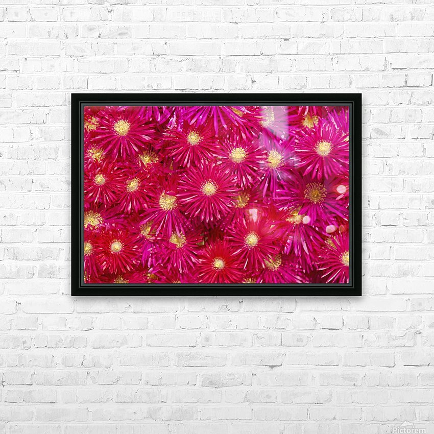 Trailing Ice Plant (Lampranthus Spectabilis) HD Sublimation Metal print with Decorating Float Frame (BOX)