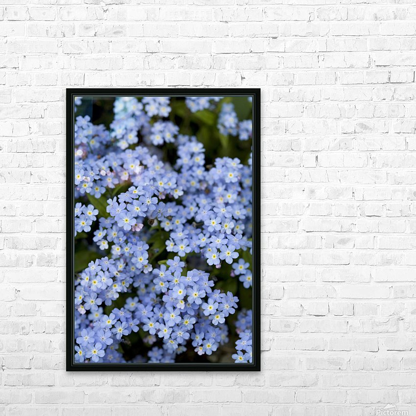 Victoria, British Columbia, Canada; Blooming Blue Flowers HD Sublimation Metal print with Decorating Float Frame (BOX)