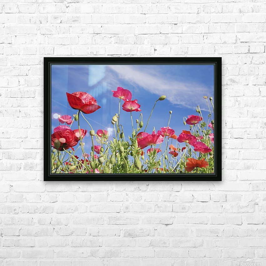 Red Flowers Against Blue Sky HD Sublimation Metal print with Decorating Float Frame (BOX)