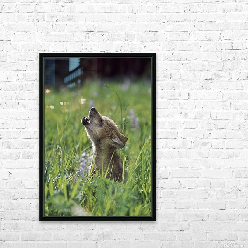 Wolf Puppy Howling In Mountain Meadow HD Sublimation Metal print with Decorating Float Frame (BOX)