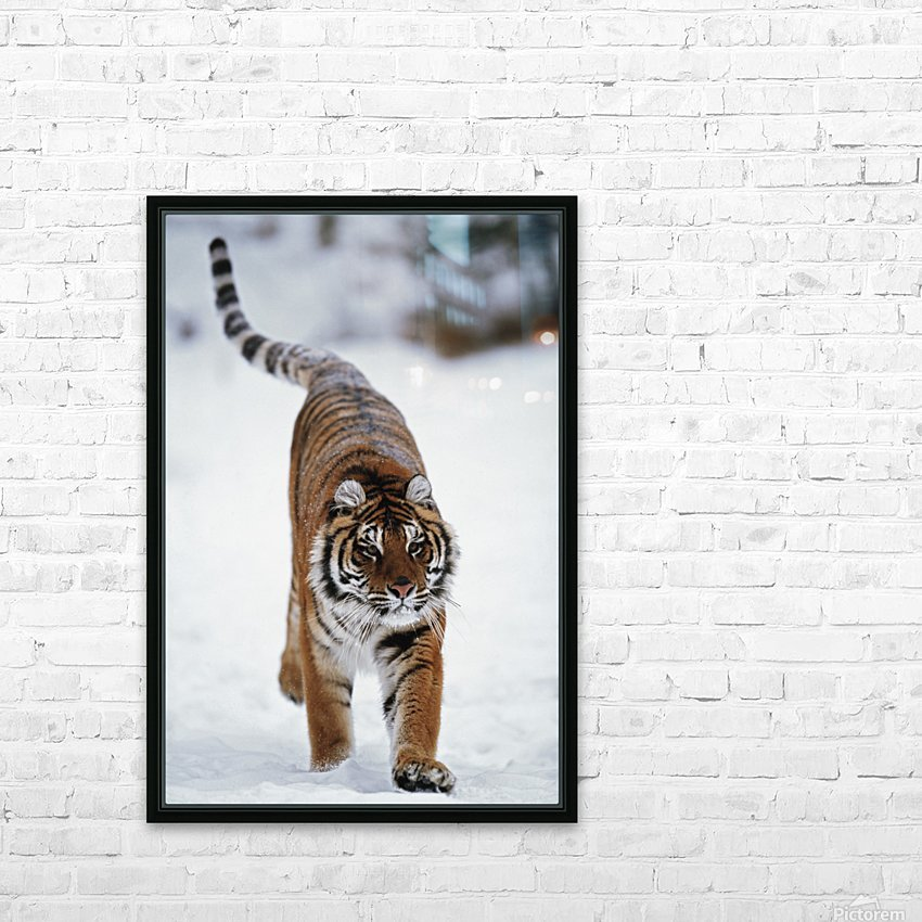 Siberian Tiger In Snow HD Sublimation Metal print with Decorating Float Frame (BOX)