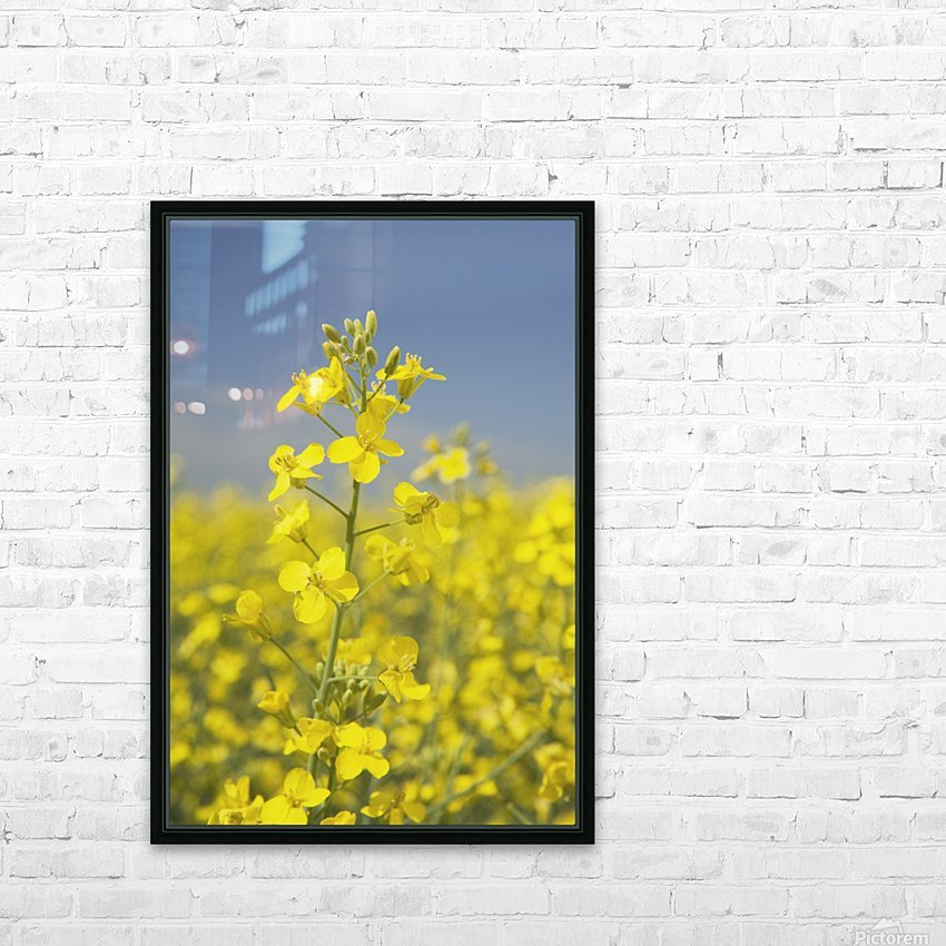 Flowering Canola, Alberta, Canada HD Sublimation Metal print with Decorating Float Frame (BOX)