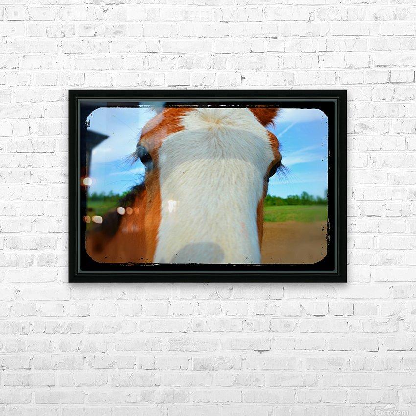 Baby Clydesdale HD sublimation métal imprimé avec décoration flotteur cadre (boîte)