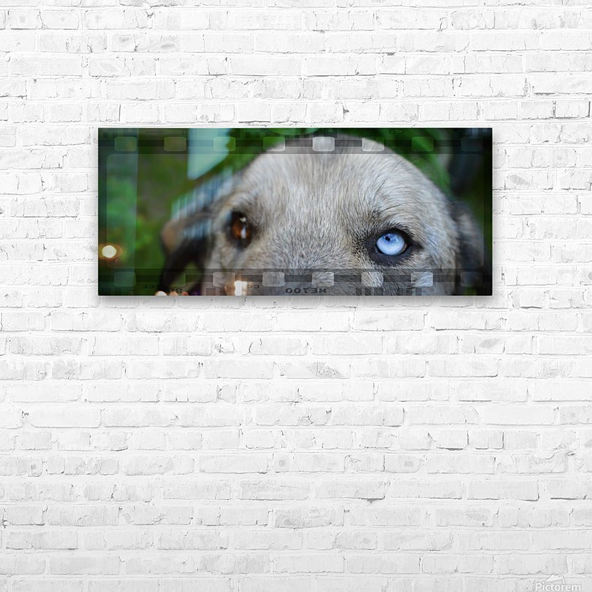 Blue Eyed Dog HD Sublimation Metal print with Decorating Float Frame (BOX)
