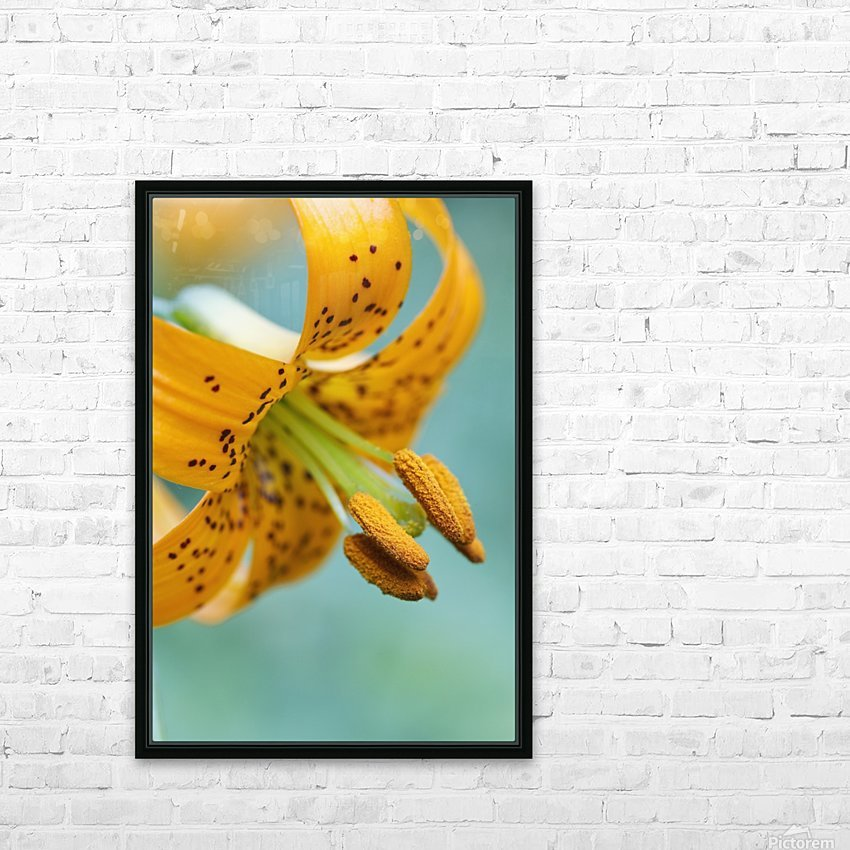 Oregon, United States Of America; A Lily On Mount Hood HD Sublimation Metal print with Decorating Float Frame (BOX)