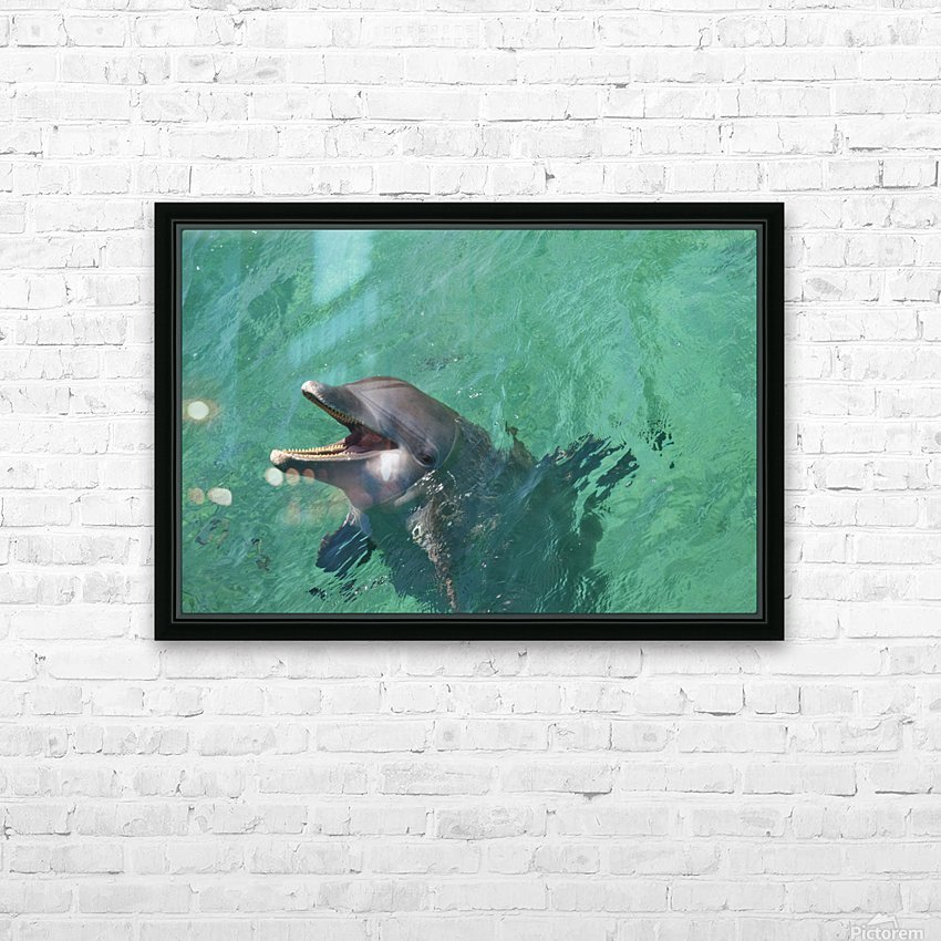 Roatan, Bay Islands, Honduras; Bottlenose Dolphin (Tursiops Truncatus) At Anthony's Key Resort HD Sublimation Metal print with Decorating Float Frame (BOX)