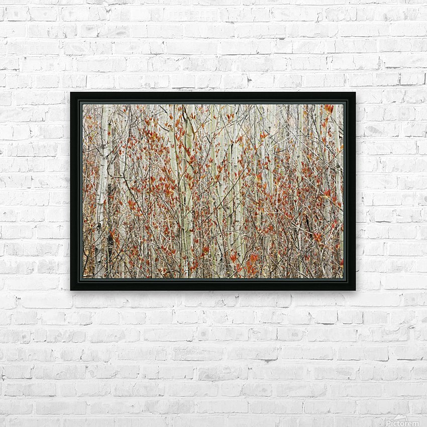 Tree Home Decor Spring Buds Against Birch Trees; Hymers Canvas Wall Art Print