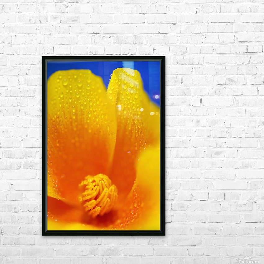 Close Up Of A Poppy With Dew On The Petals; Happy Valley, Oregon, Usa HD Sublimation Metal print with Decorating Float Frame (BOX)