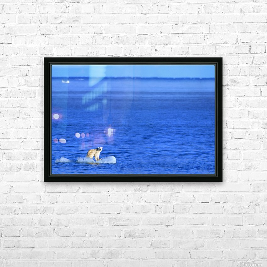 Polar Bear (Ursus Maritimus) Standing On A Piece Of Floating Ice; Coburg Island, Nunavut, Canada HD Sublimation Metal print with Decorating Float Frame (BOX)