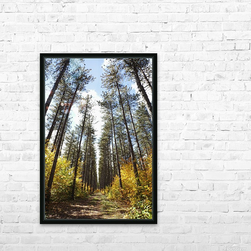 Path Through A Forest In Autumn; Sault St. Marie, Ontario, Canada HD Sublimation Metal print with Decorating Float Frame (BOX)