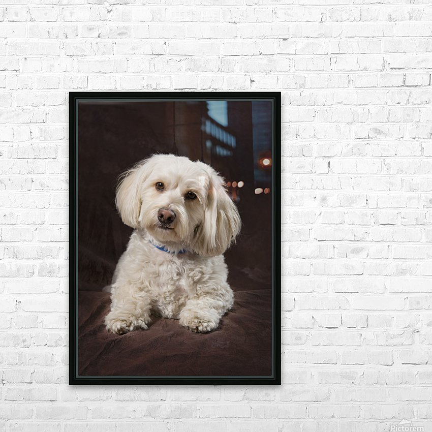 Shih Tzu-Poodle On A Brown Muslin Backdrop HD Sublimation Metal print with Decorating Float Frame (BOX)