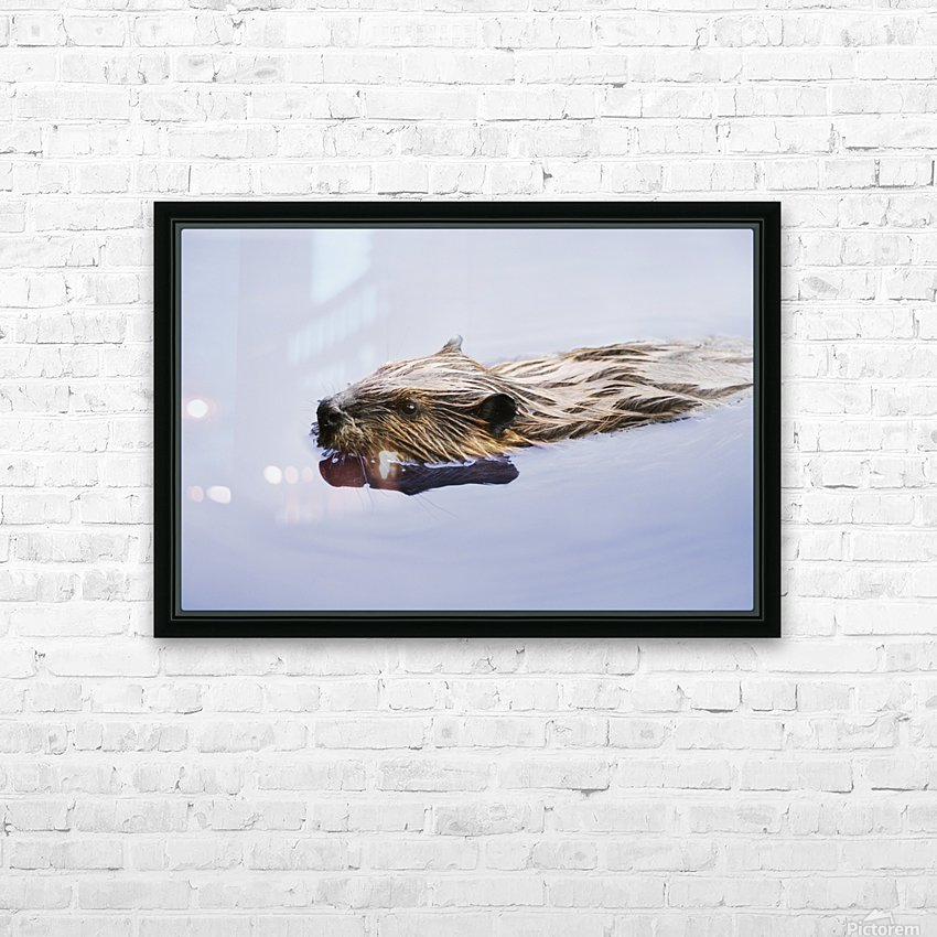 View Of Beaver, Chaudiere-Appalaches Region., Quebec, Canada HD Sublimation Metal print with Decorating Float Frame (BOX)