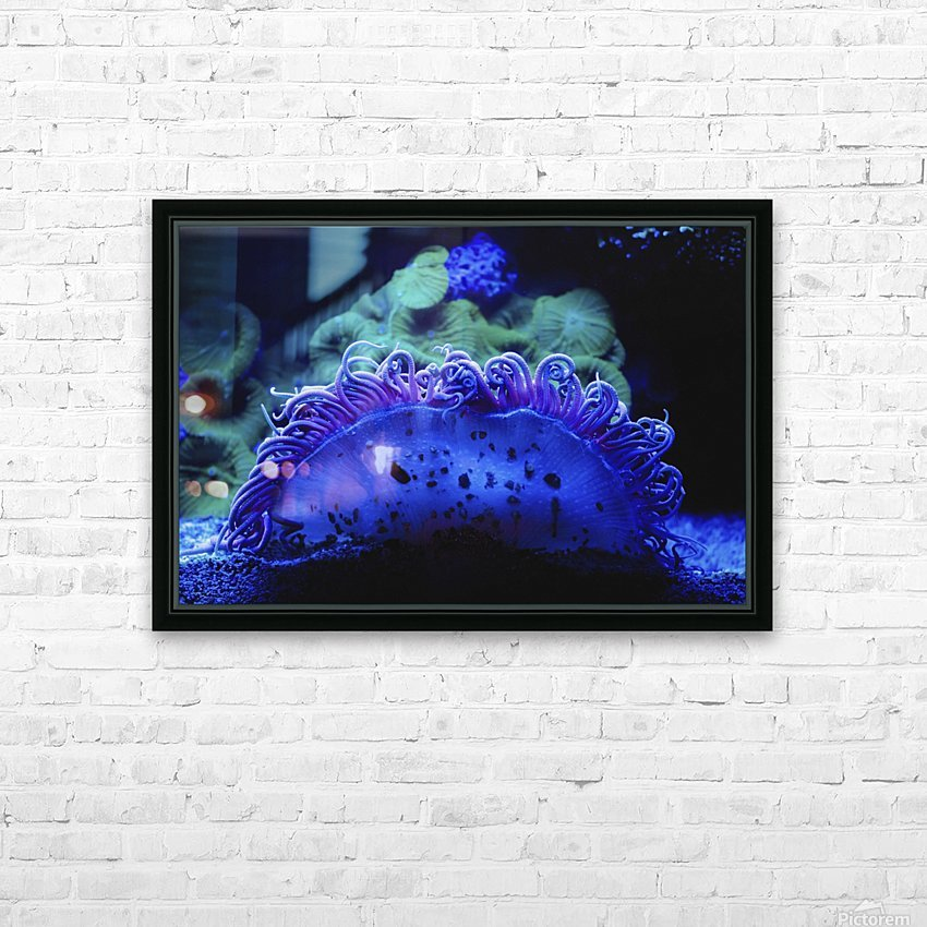 Blue coral underwater;Israel HD Sublimation Metal print with Decorating Float Frame (BOX)