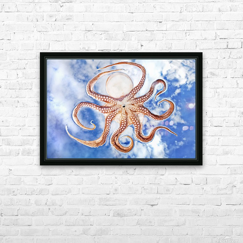 An octopus with blue sky and cloud in the background HD Sublimation Metal print with Decorating Float Frame (BOX)